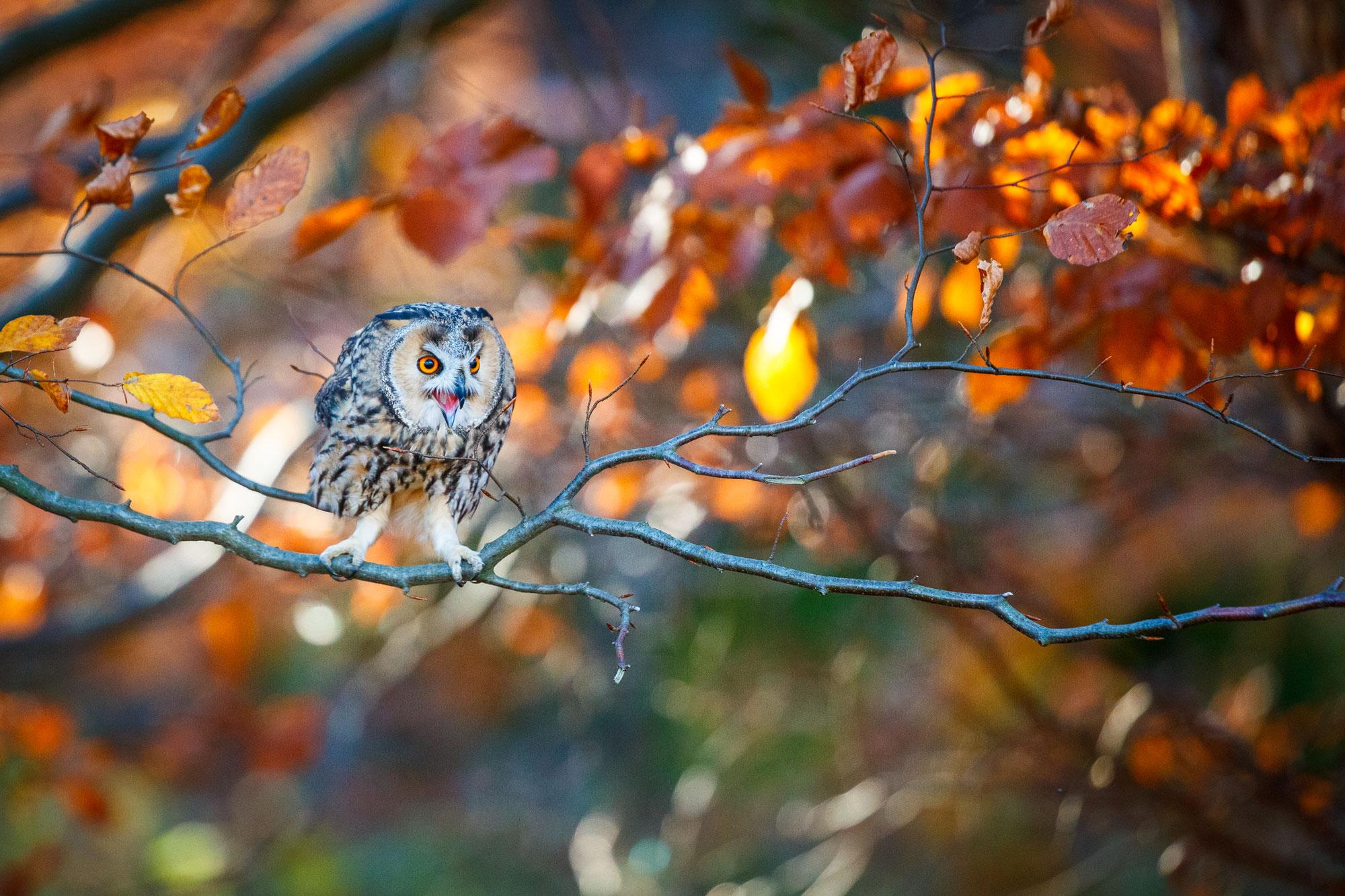 Tom_Schueler_Fotografie_Wildlife_Birds_2