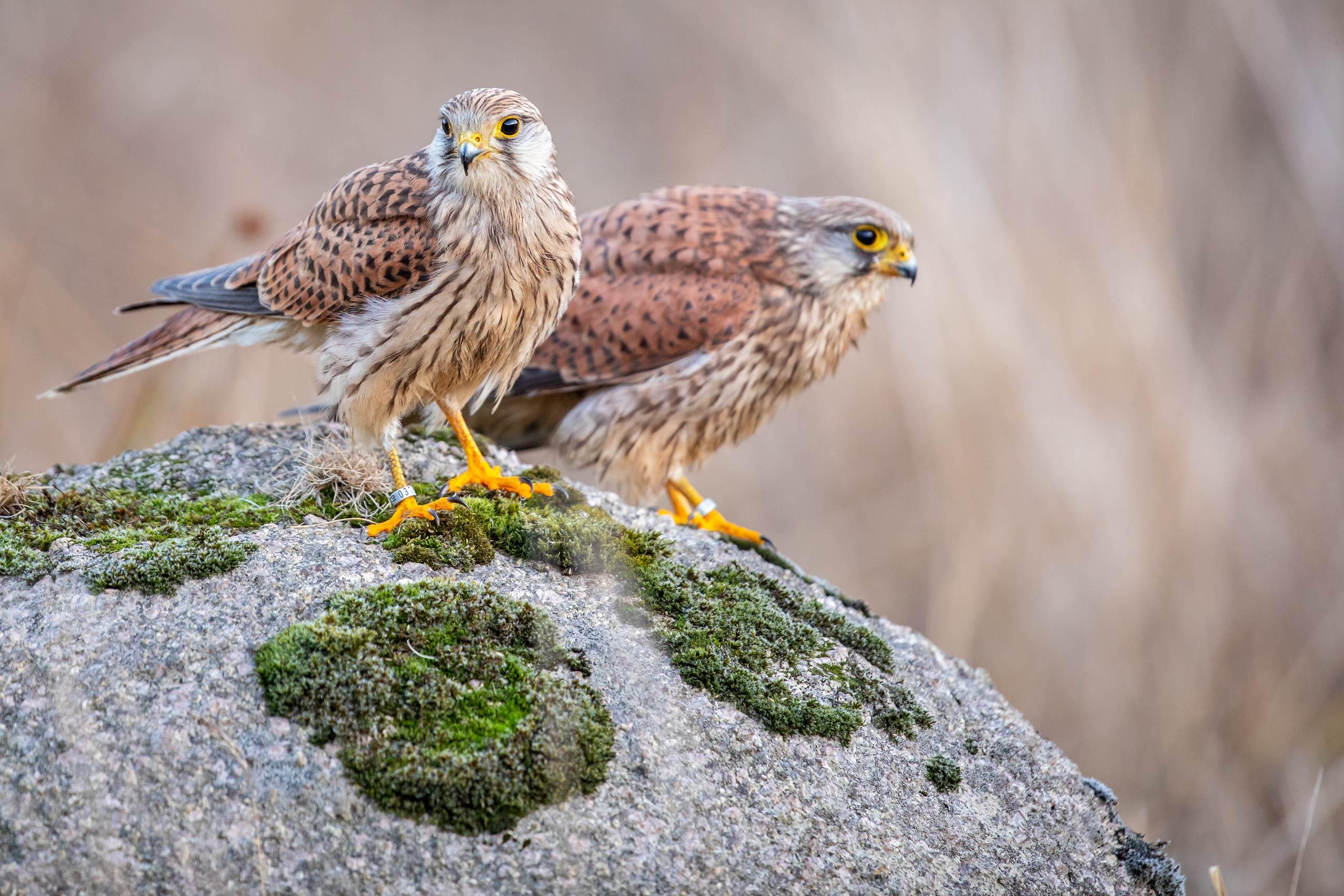 Tom_Schueler_Fotografie_Wildlife_Birds_6