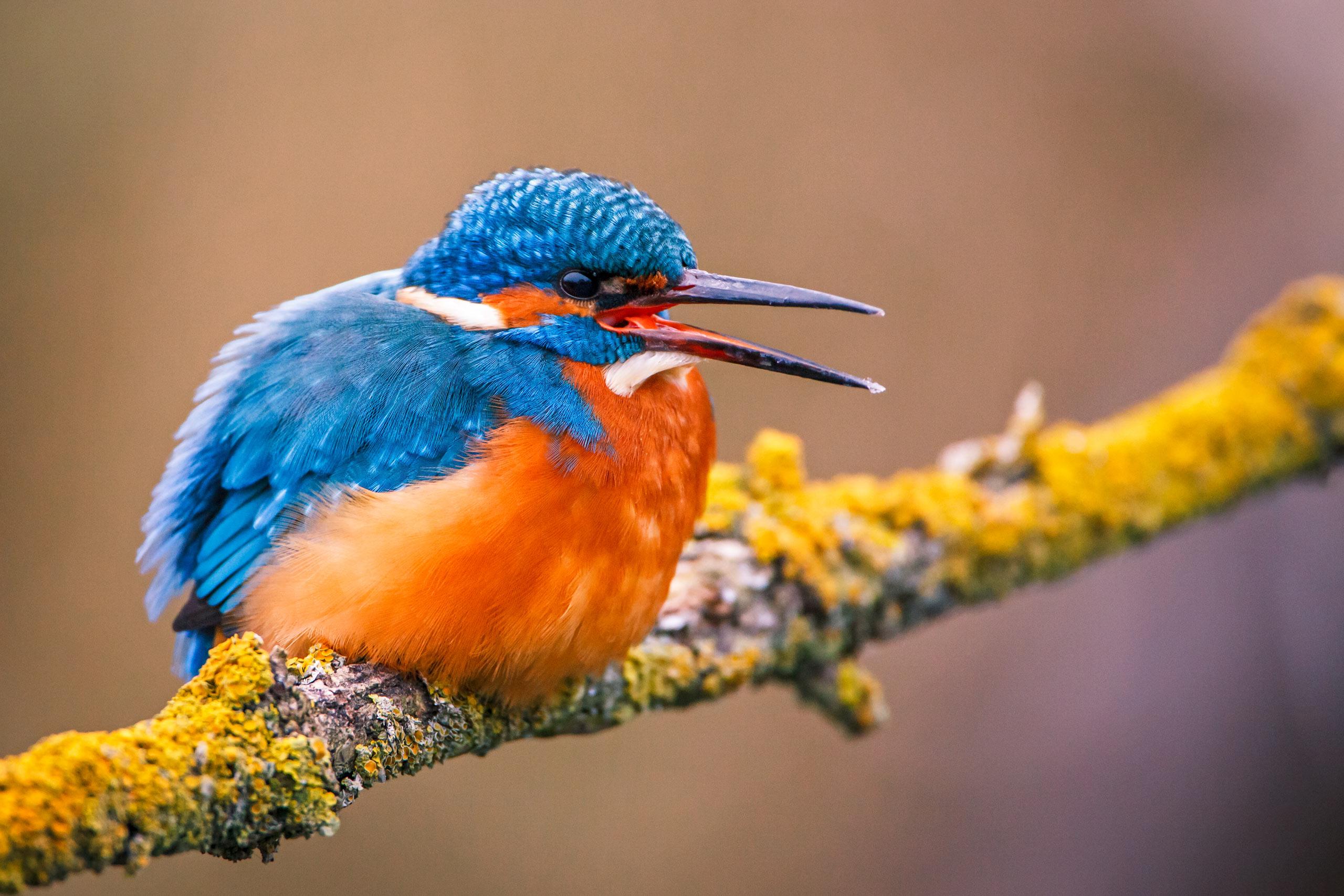 Tom_Schueler_Fotografie_Wildlife_Birds_8
