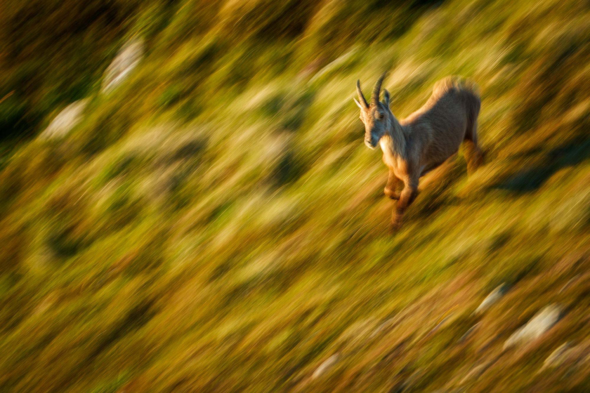 Tom_Schueler_Fotografie_Wildlife_Mammals_2