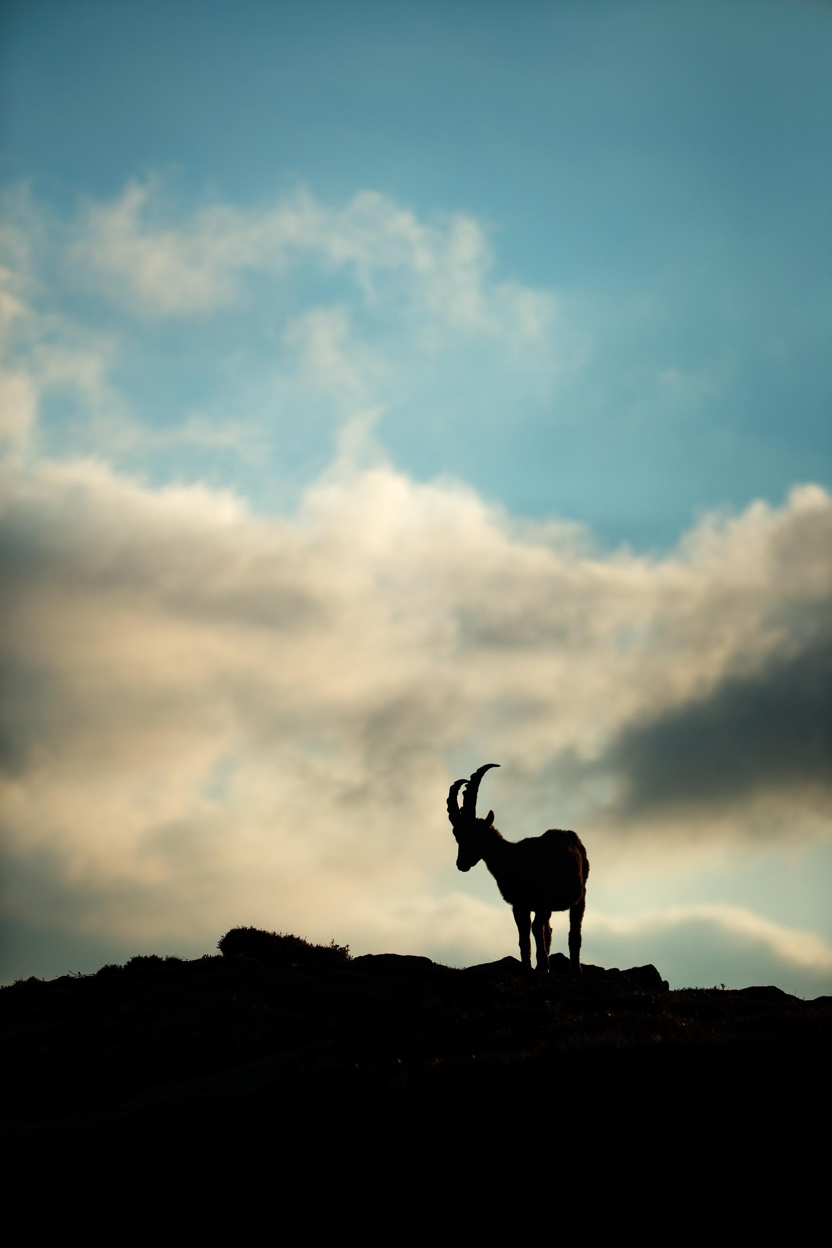 Tom_Schueler_Fotografie_Wildlife_Mammals_3