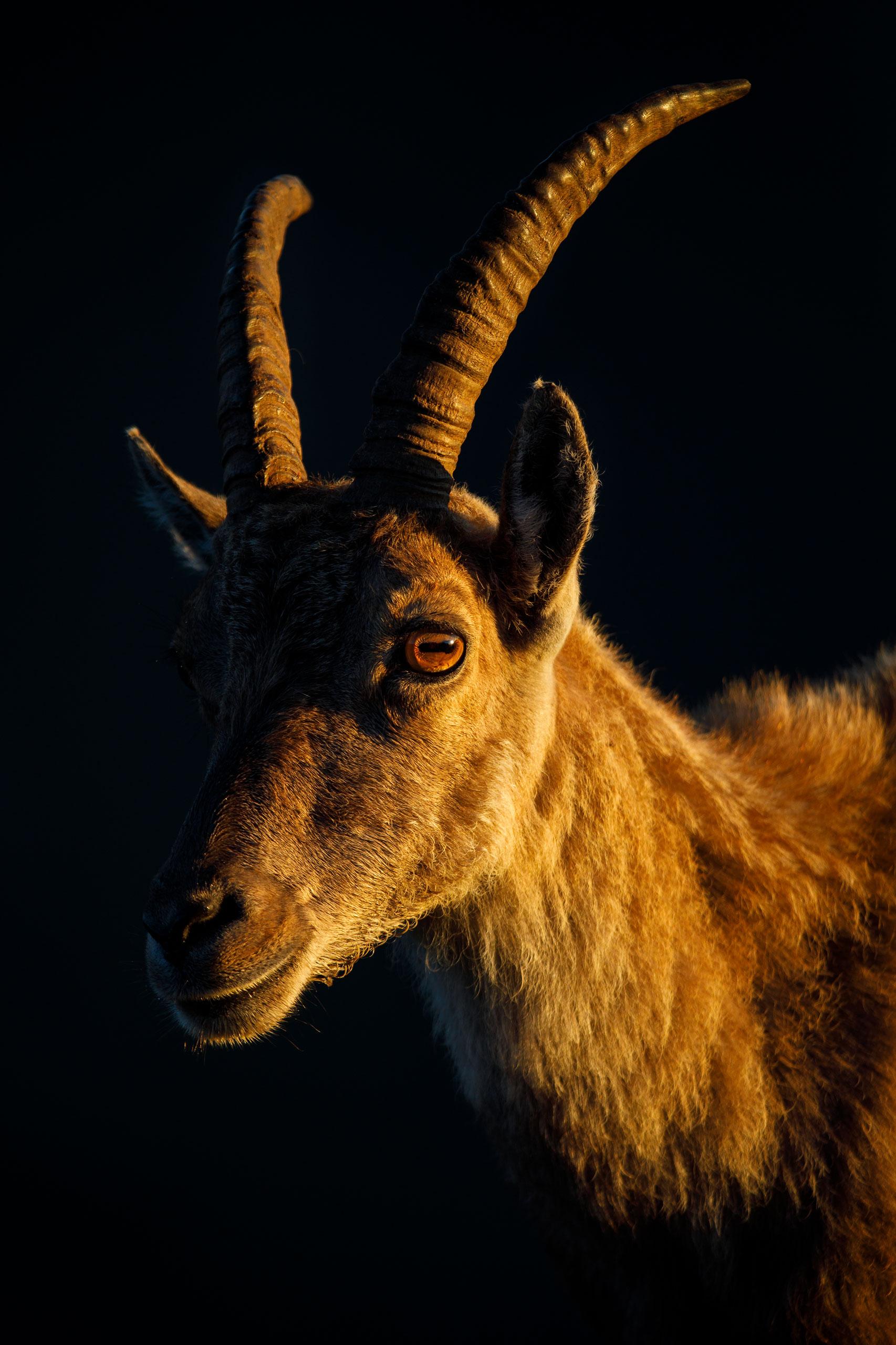 Tom_Schueler_Fotografie_Wildlife_Mammals_6