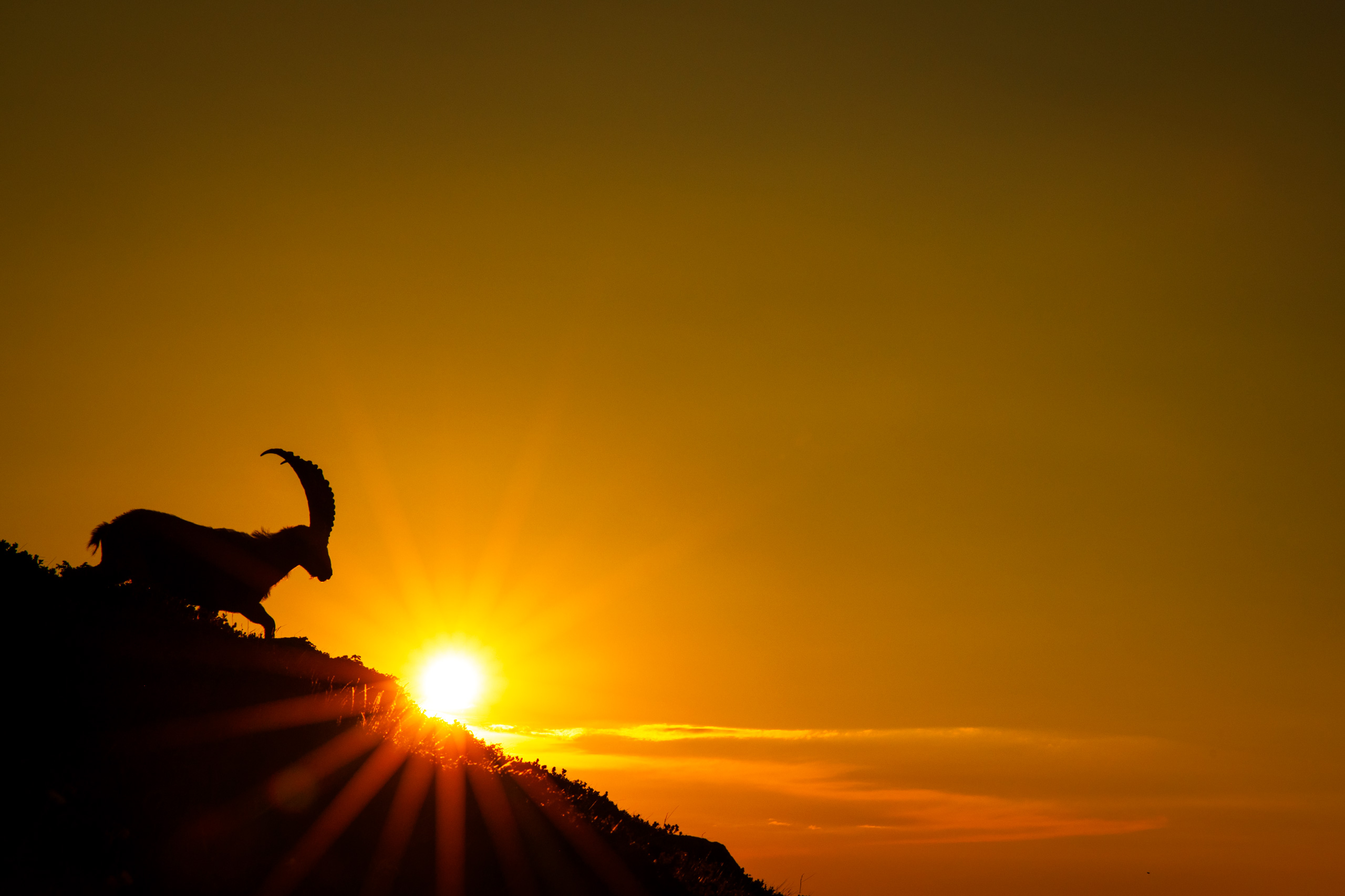 Tom_Schueler_Fotografie_Wildlife_Mammals_12