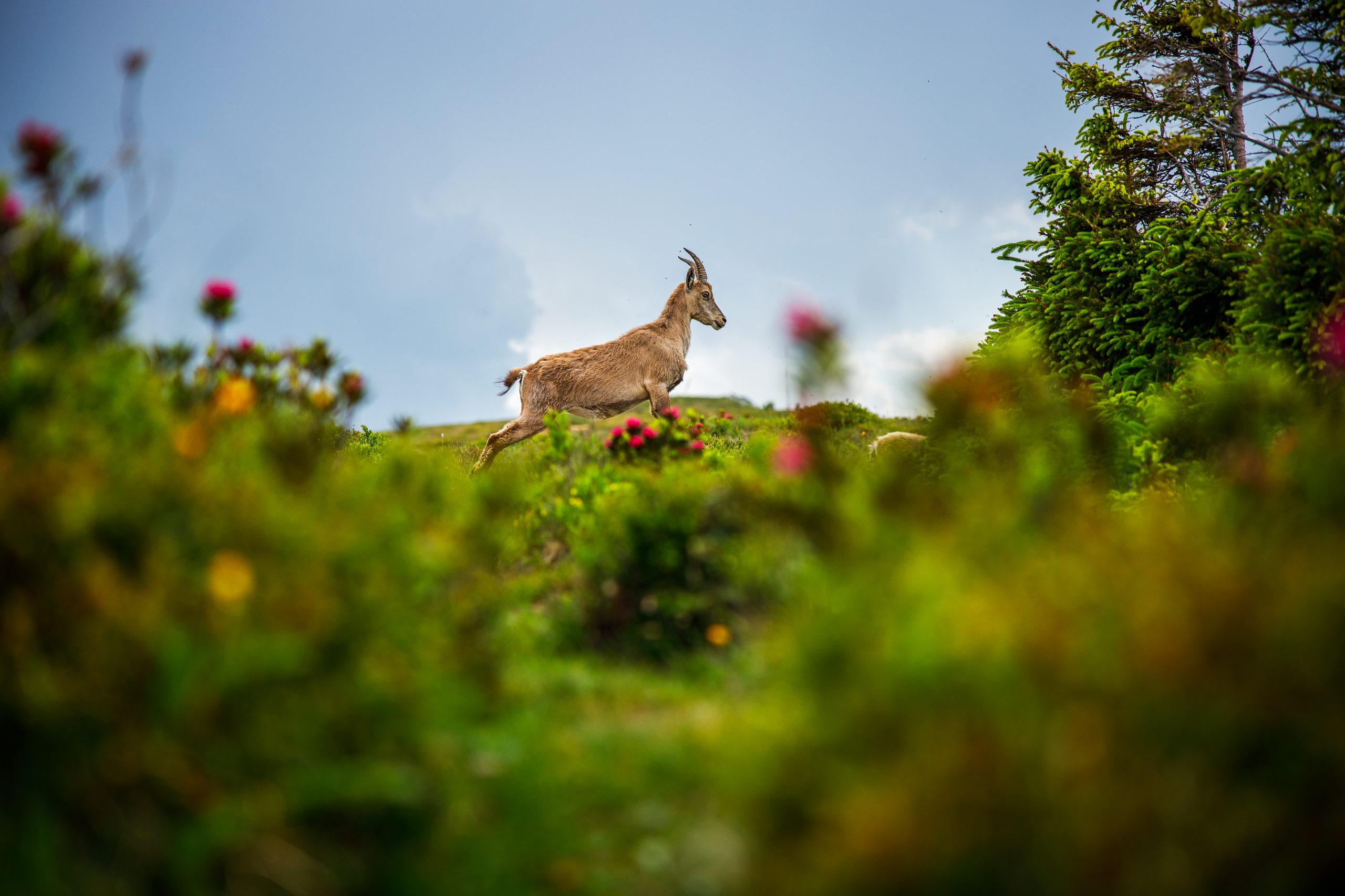 Tom_Schueler_Fotografie_Wildlife_Mammals_8