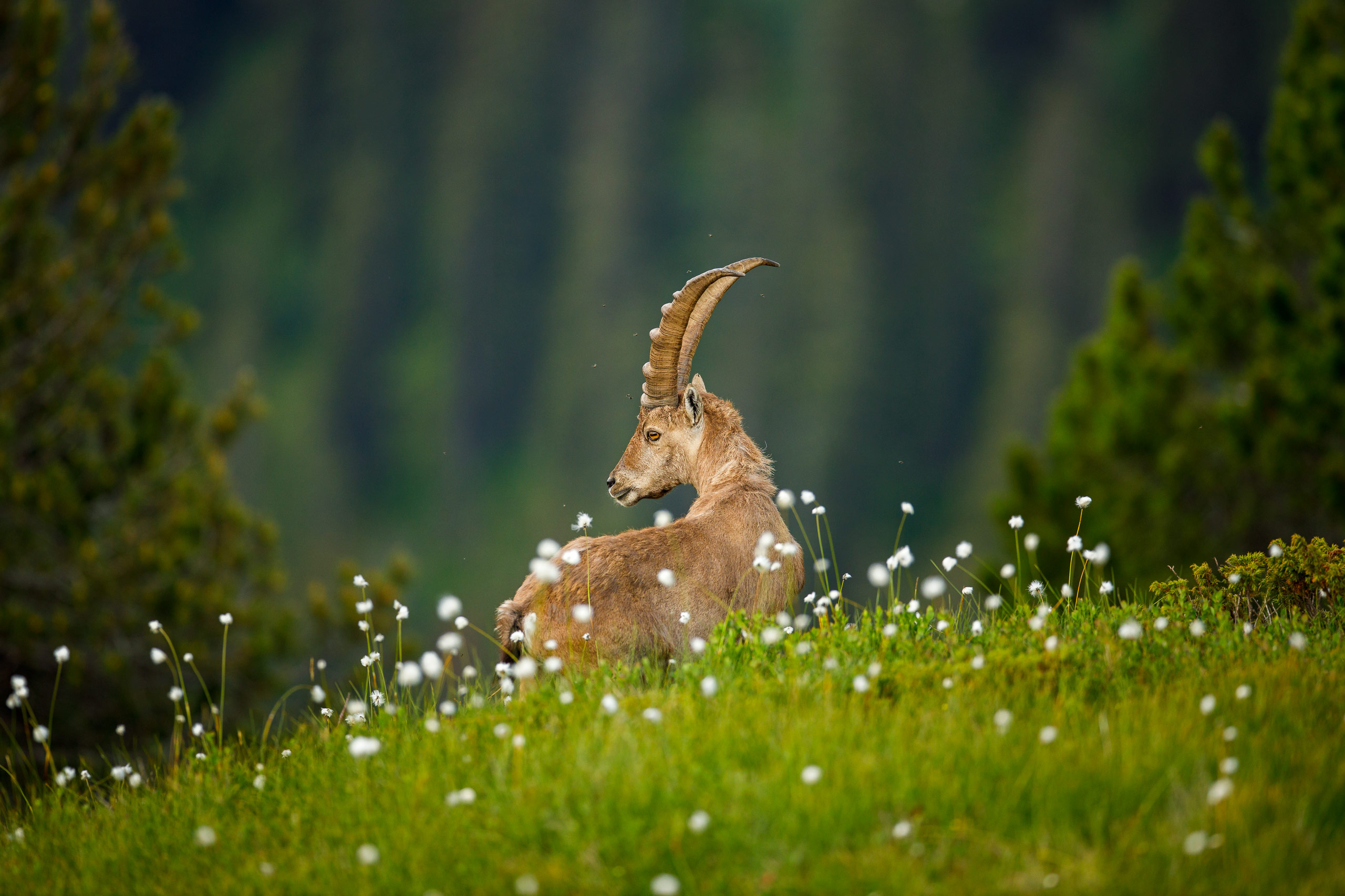 Tom_Schueler_Fotografie_Wildlife_Mammals_10