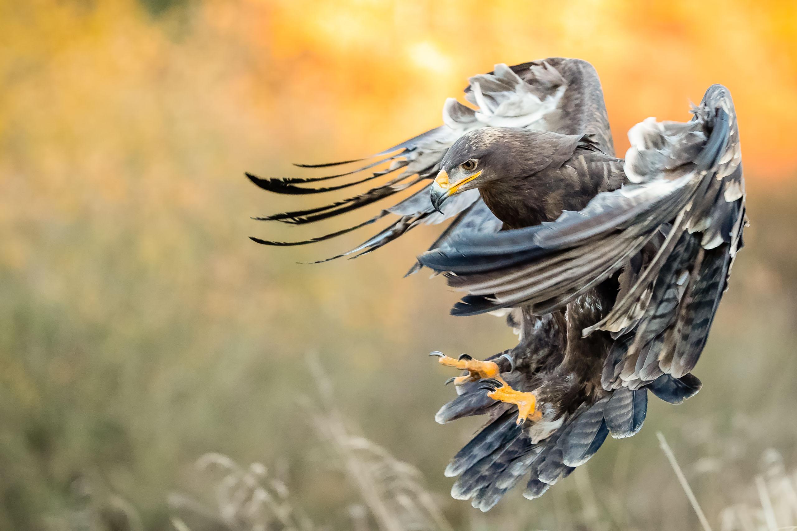 Tom_Schueler_Fotografie_Wildlife_Birds_9