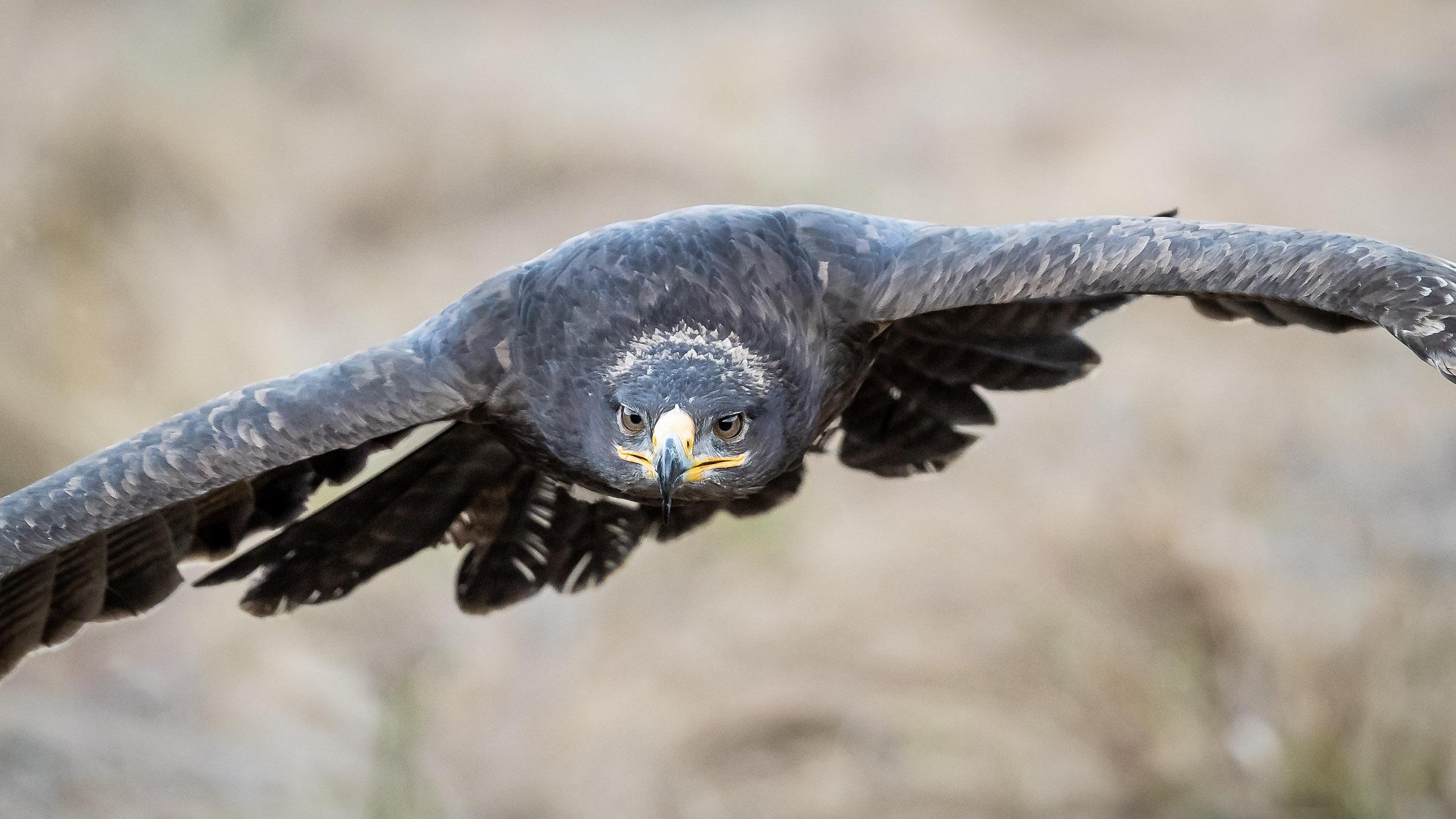 Tom_Schueler_Fotografie_Wildlife_Birds_10