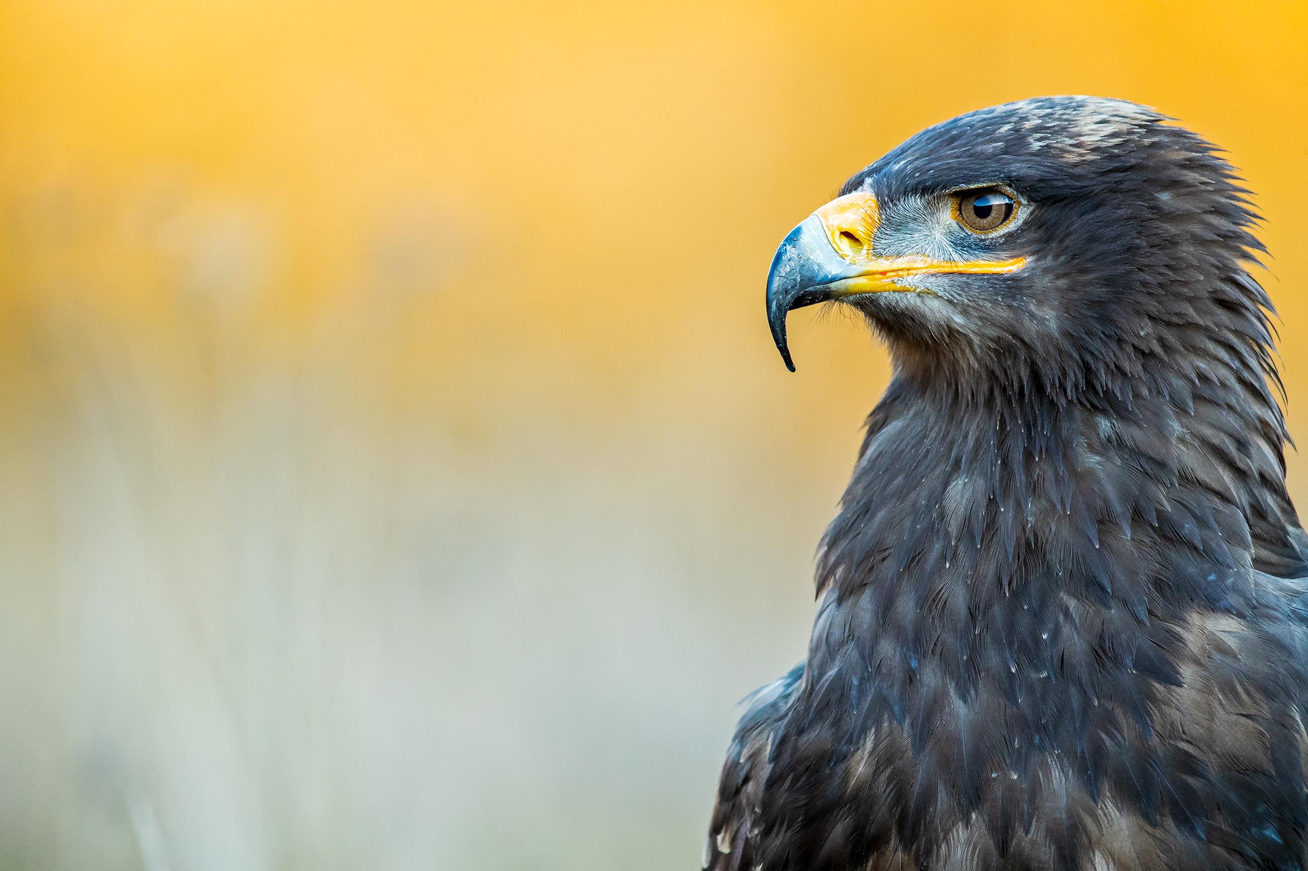 Tom_Schueler_Fotografie_Wildlife_Birds_12