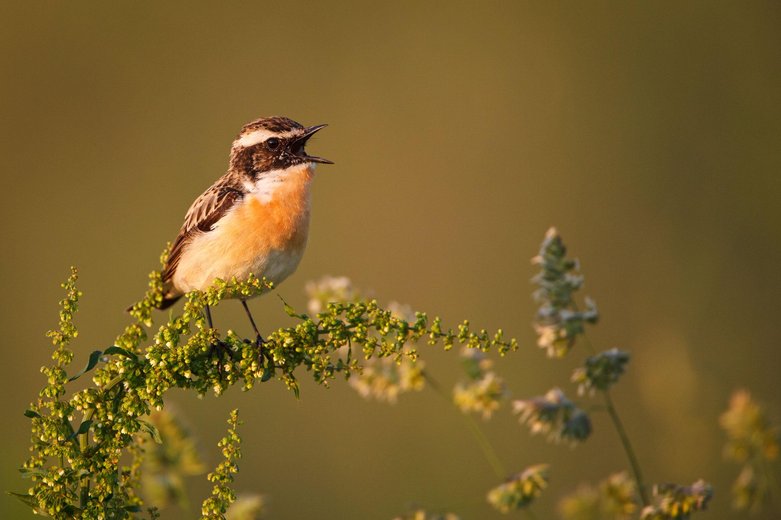 Tom_Schueler_Fotografie_Wildlife_Birds_15