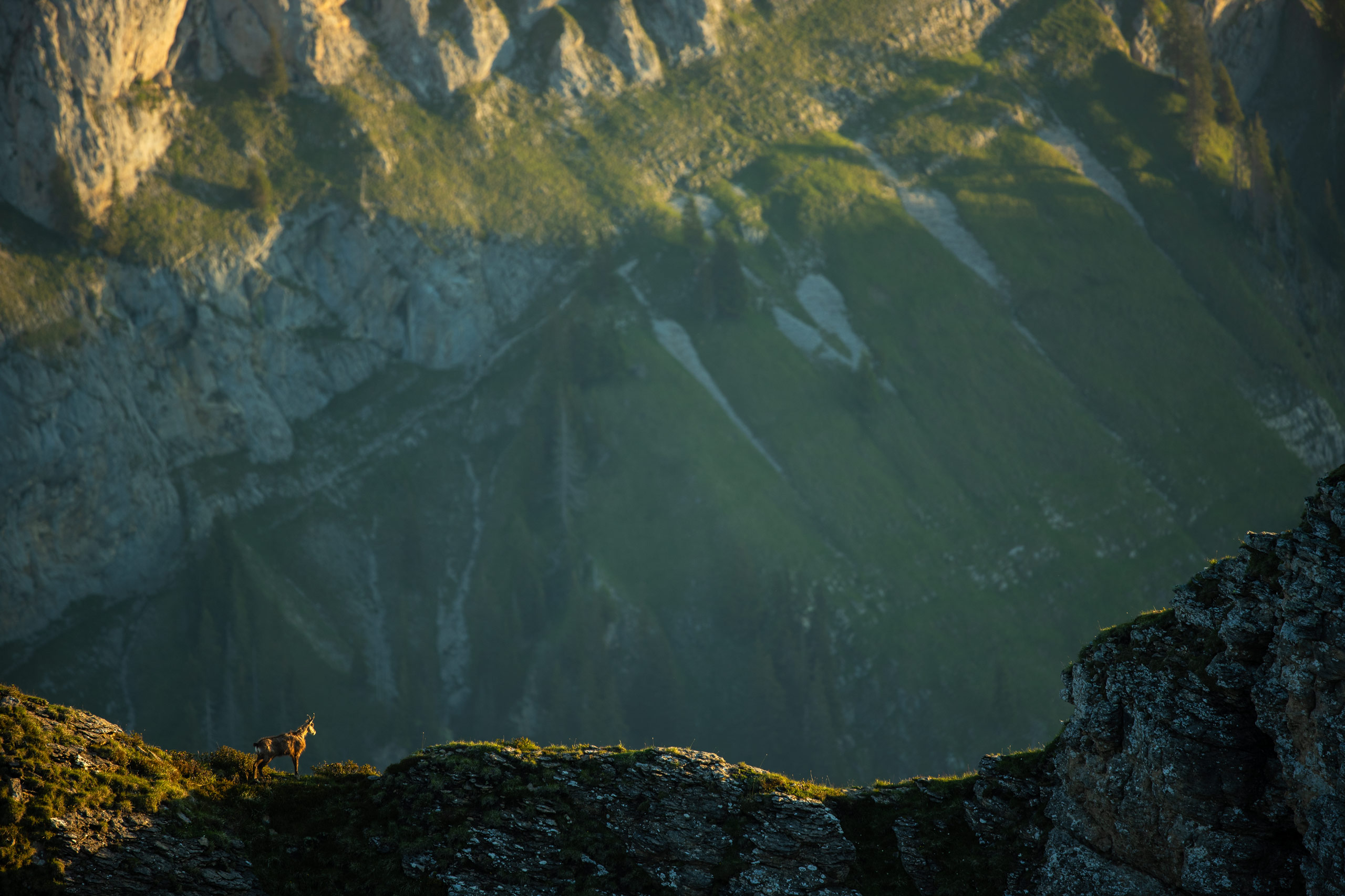 Tom_Schueler_Fotografie_Wildlife_Mammals_16
