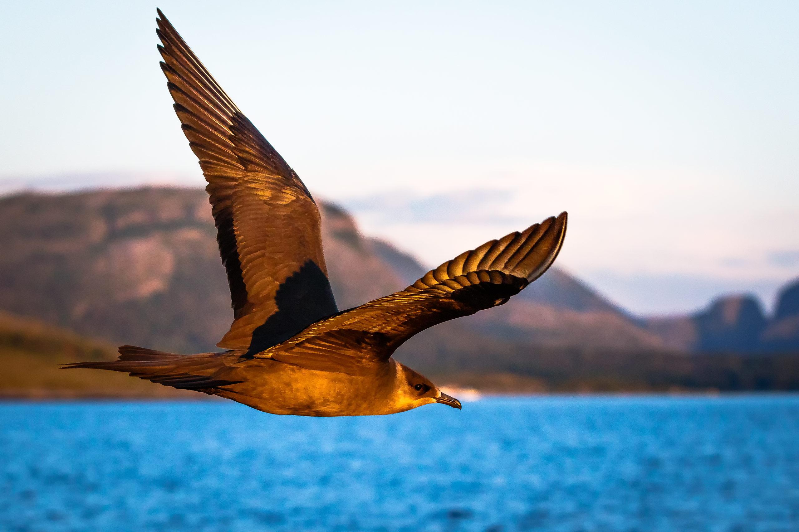 Tom_Schueler_Fotografie_Wildlife_Birds_20