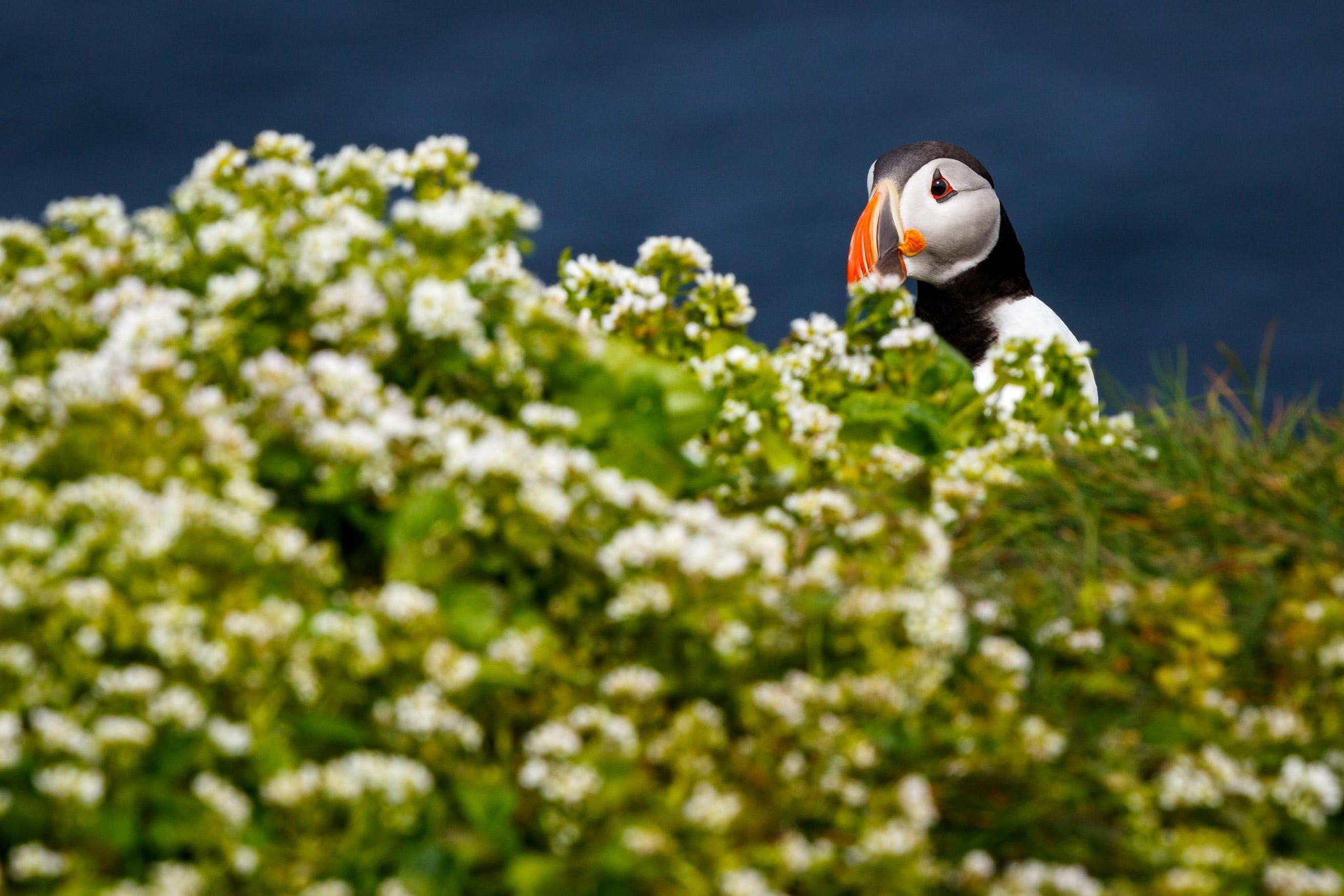 Tom_Schueler_Fotografie_Wildlife_Birds_14